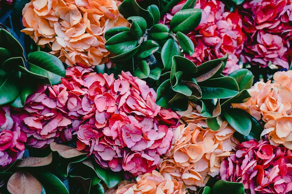 Денежный поток. 5 цветов, которые приносят богатство и любовь в дом
