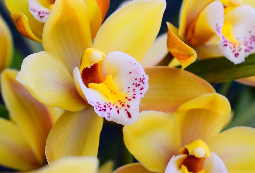 Розы, пионы или ромашки: как узнать черты характера человека по цветам