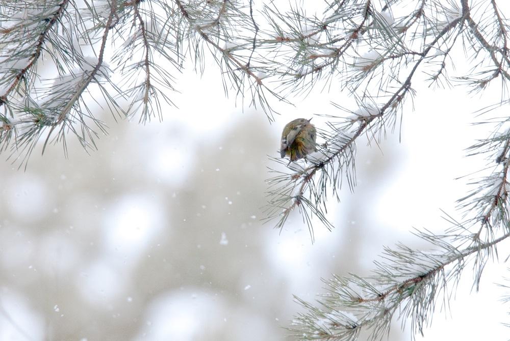 Самая маленькая птичка. В лесах под Челябинском заметили крошечных колибри