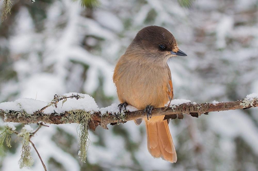 Птица-бабочка. Одно из самых скрытных созданий сфотографировали на Урале