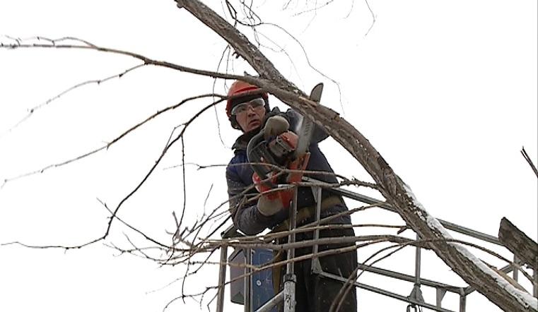 Грозили упасть на головы. Магнитогорск избавляют от опасных веток деревьев
