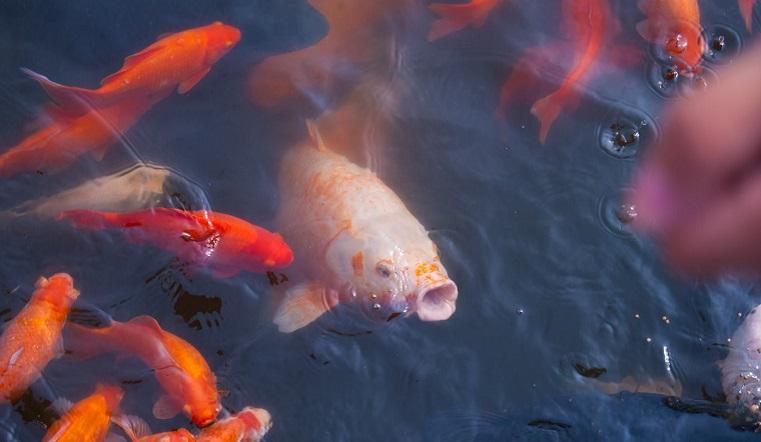 Самая уродливая и грустная: ученые раскрыли тайну рыбы с человеческим лицом