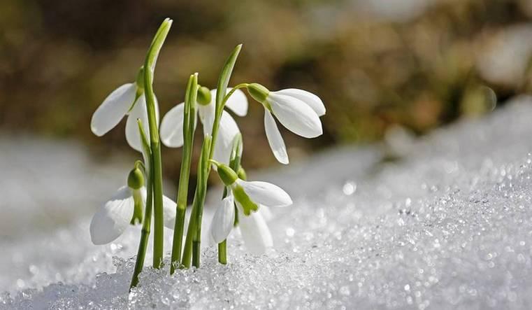 Не радость, а страдание. На ком плохо отразится ранний приход весны?