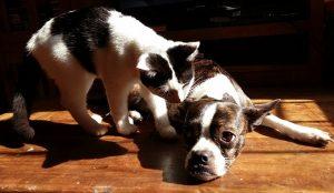 Опасное ми-ми-ми. Врачи рассказали, могут ли кошки и собаки заболеть коронавирусом
