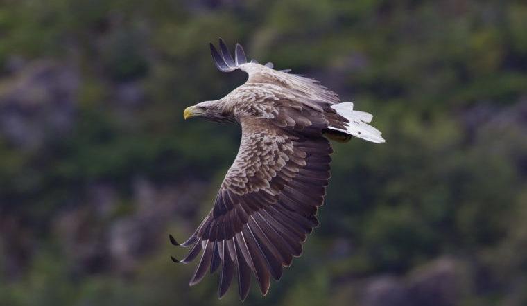 Невероятно. На Урале нашли гигантскую птицу, которой 2 тысячи лет