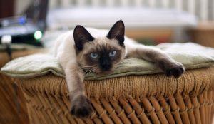 Не делаете так никогда. 7 вещей, которые на самом деле ненавидят кошки