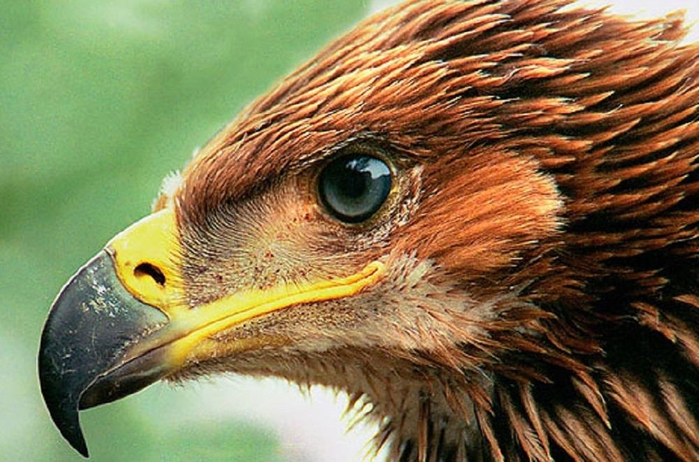 Крылатая молния. На Урале заметили одну из самых быстрых птиц в мире