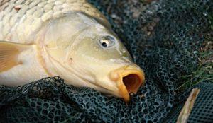 Жизнь бурлит. На Урале обсуждают странное поведение рыб в озёрах