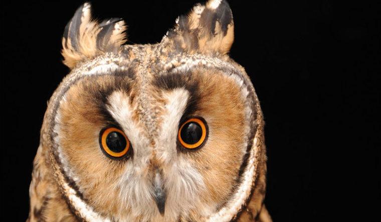 Большие уши. На Урале нашли птиц, которым 80 миллионов лет