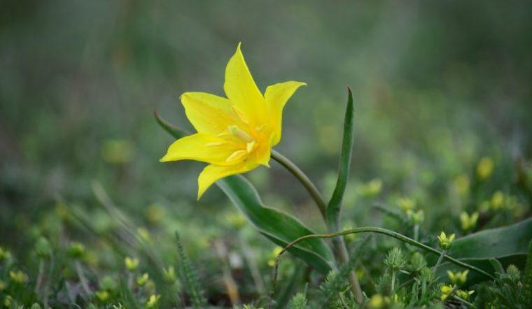 Идеальные лепестки. Самые дорогие цветы нашли в лесах Урала