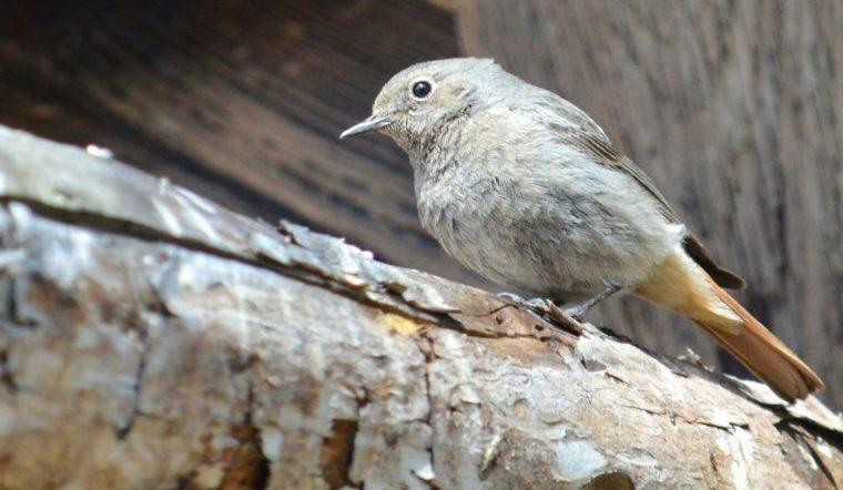Хвост красный. На Урале нашли птиц, которым 3 миллиона лет