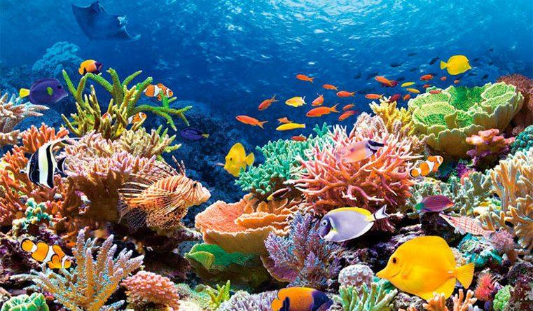 Катастрофа все ближе. Экологи прогнозируют полную гибель коралловых рифов
