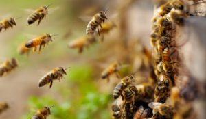 Что предвещает день Зосима пчельника. Приметы на 30 апреля