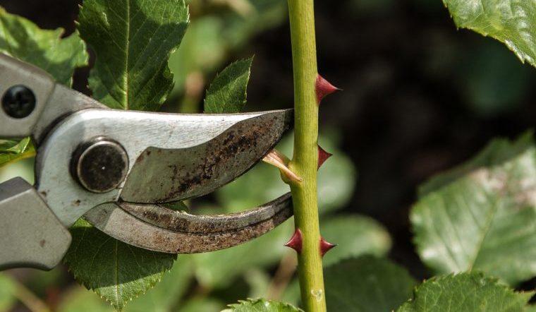 Садовые технологии. Какие инструменты пригодятся на даче