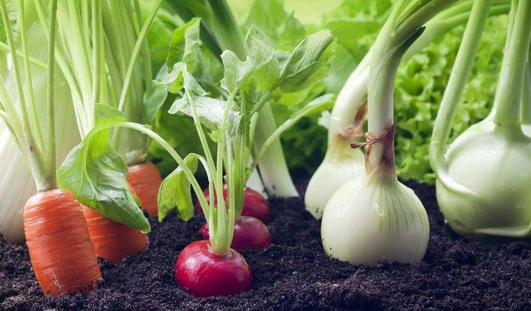 Опасное соседство. Какие овощи, ягоды и цветы нельзя сажать рядом