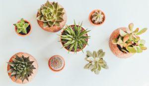 Денежный магнит. 5 комнатных растений для привлечения богатства и любви