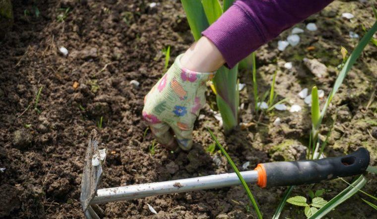 Календарь садовода. Когда и что посадить в огороде в мае, благоприятные дни