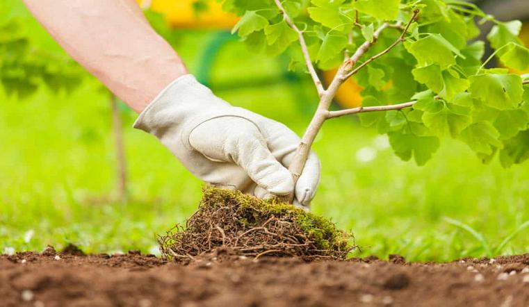 Зеленая акция. Жители Южного Урала высаживают тысячи деревьев к 9 мая