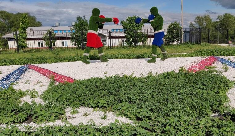 Необычный газон. Плантация конопли выросла у спортивной школы в Челябинске