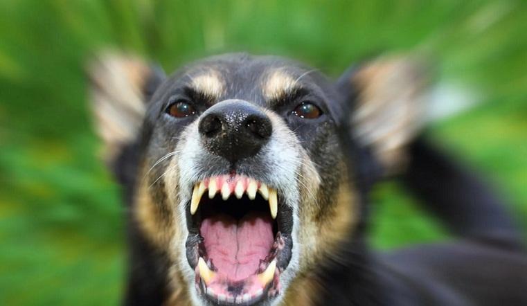 Шок и слезы. В Челябинске агрессивная собака набросилась на играющих во дворе детей