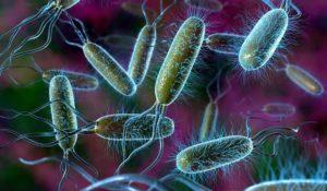Друзья среди врагов. Какие бактерии помогают нам жить