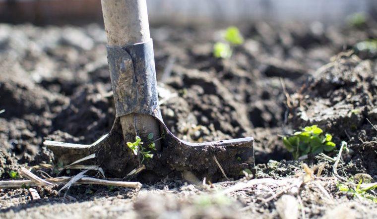 Календарь садовода на 2020 год. Что нужно успеть сделать в мае