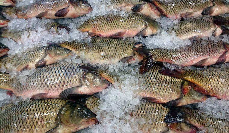 Только самки. «Женское» озеро нашли рыбаки на Урале ВИДЕО