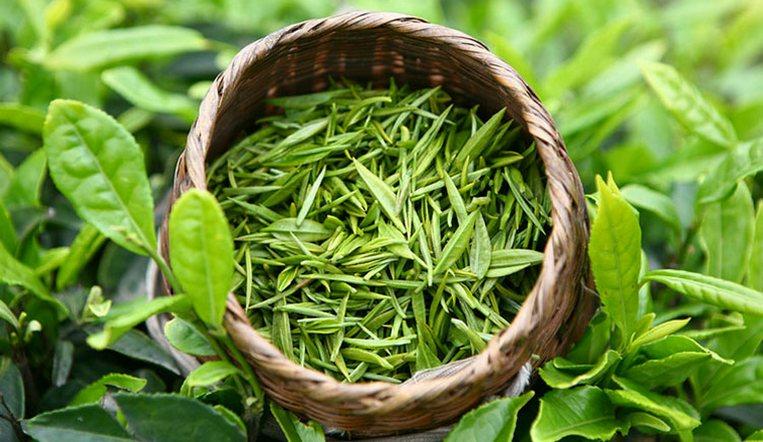 Помогает при аллергии. У зеленого чая нашли новые свойства