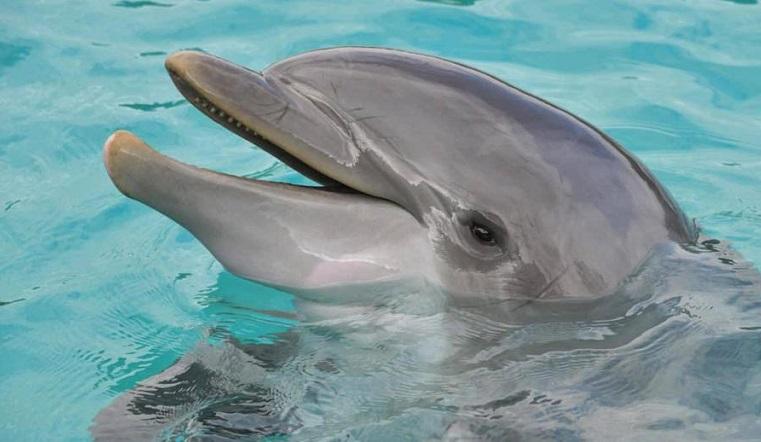 8 млн за дельфина. Уральский зоозащитник придумал, как вызволить пленника из водного цирка