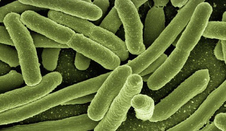 Опаснее вирусов. Ученые назвали 10 самых смертельных для человека бактерий