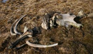 Кости особой ценности. Где на Урале можно найти останки мамонтов и пещерных медведей