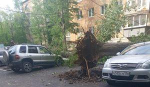 Оранжевый уровень опасности. В Челябинске ураганный ветер повалил деревья