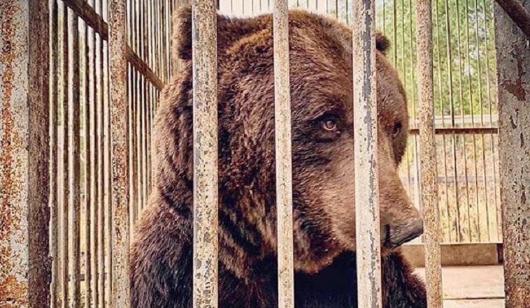 «Мечется по клетке в поисках еды». На Урале медведь умирает заживо
