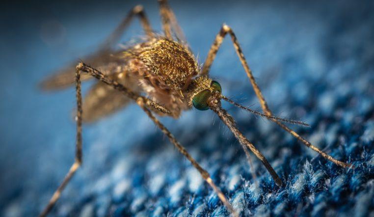Смертельно опасны. 5 страшных болезней, которые переносят комары