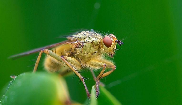 Разносчики инфекций. Биолог рассказала об опасности домашних мух