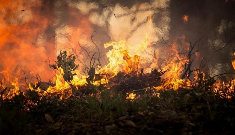 Пожары и смерчи. В МЧС предупредили о грядущей засухе
