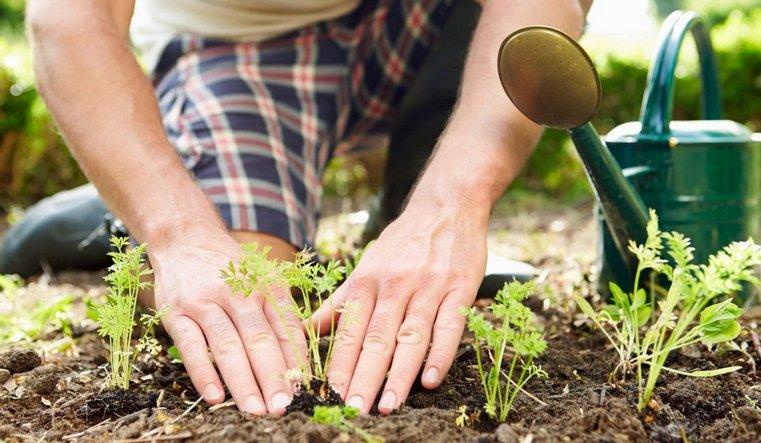 Как правильно посадить огород. 8 правил для начинающих дачников