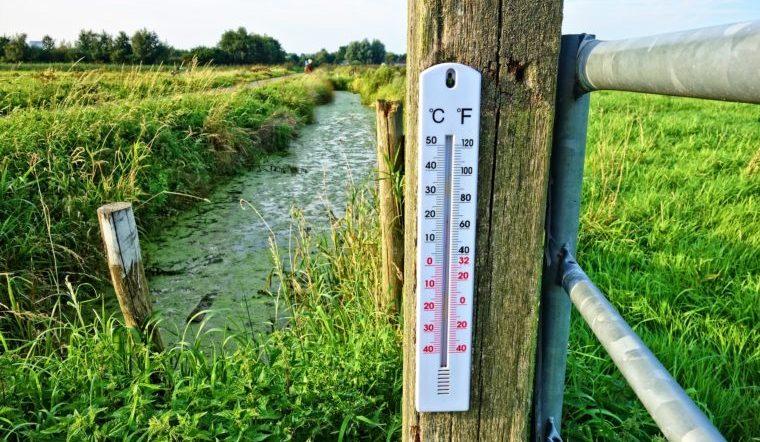 Пора опасаться за урожай. Синоптики рассказали, какая погода ждет жителей Урала