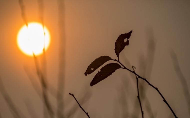 Сгорим в аду? Ученые назвали причину аномальной жары