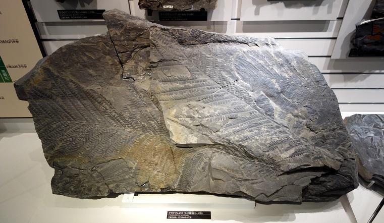 Видел динозавров. На Урале нашли камень с отпечатком растения возрастом 200 млн лет