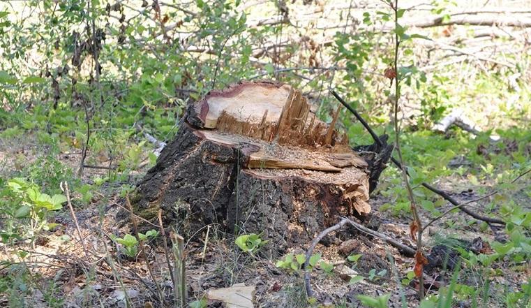 Лес под топор. В Челябинске вырубили деревья в новом микрорайоне