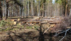 Лес под топор в новом микрорайоне. В Челябинске опять вырубили деревья