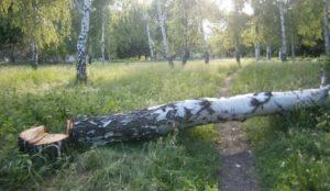 Березовый лес – под топор. Челябинцы вышли на пикет против застройщика