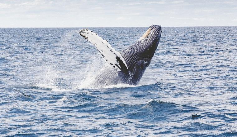 Сбить высокую температуру. Морские обитатели покидают привычную среду