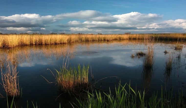 """Разрушают """"птичий рай"""". В уникальное озеро в Челябинской области сливают нечистоты"""