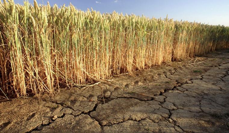 Режим ЧС из-за засухи объявлен в Челябинской области