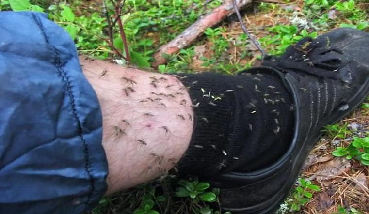 Нет живого места. Тучи комаров нападают на людей на Южном Урале
