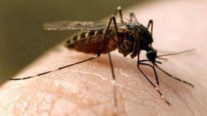 Черви под кожей. Комары заразили жителей Урала опасной болезнью