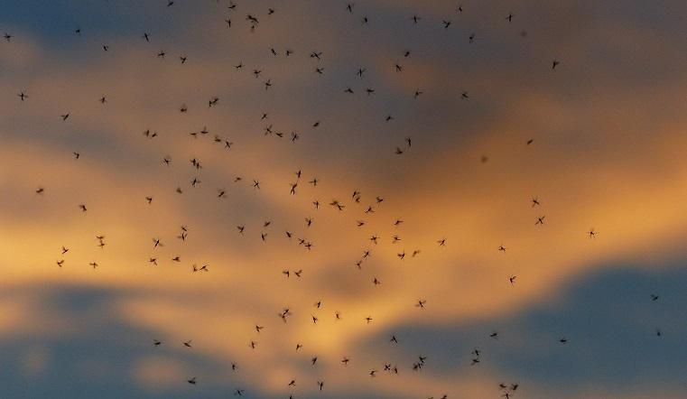 «Атака крылатых бесов». Полчища комаров нападают на жителей Урала