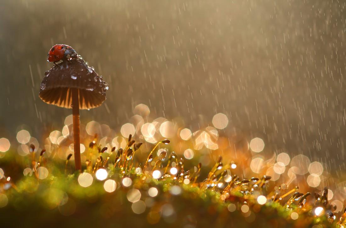 Зальет дождями. Синоптики составили прогноз погоды в Челябинской области